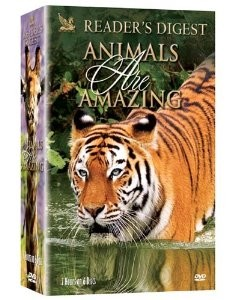 Animals Are Amazing 6 pk.
